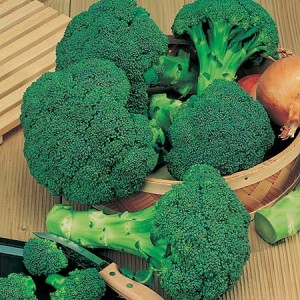 calabrese-green-sprouting-broccoli