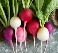 Mystery Mix, mix of different coloured round radishes.